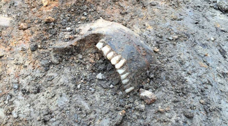 A  human mandible emerges from the Roman layers of Broadgate ticket hall excavation April 2015_19518