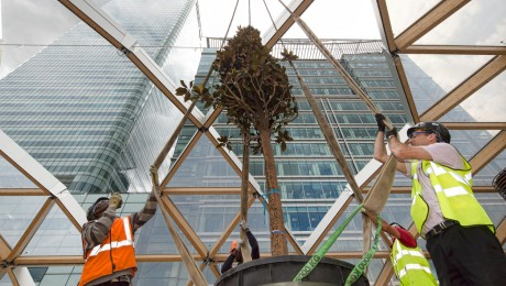 First tree is planted above Canary Wharf station