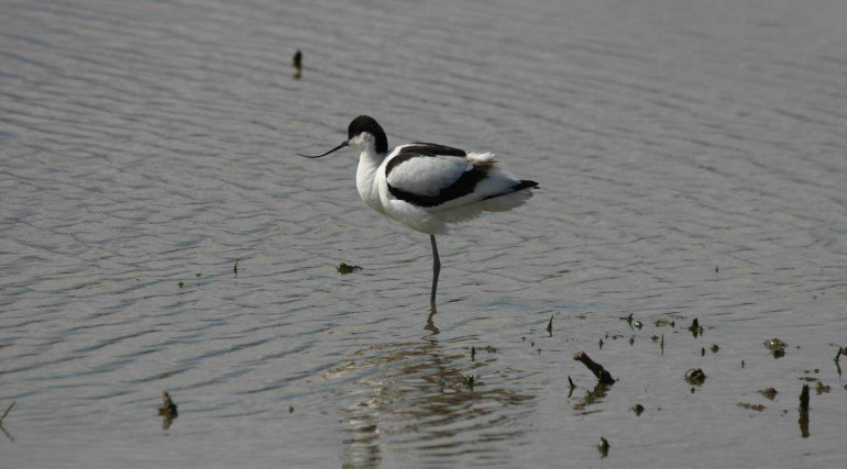 Wallasea Birds_21041